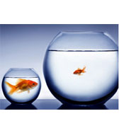 Change your strategy: become big fish in small pond